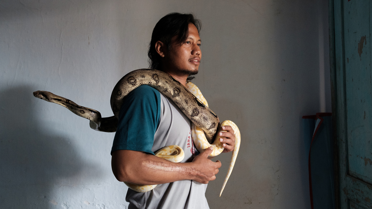 How to save a country from snakebite