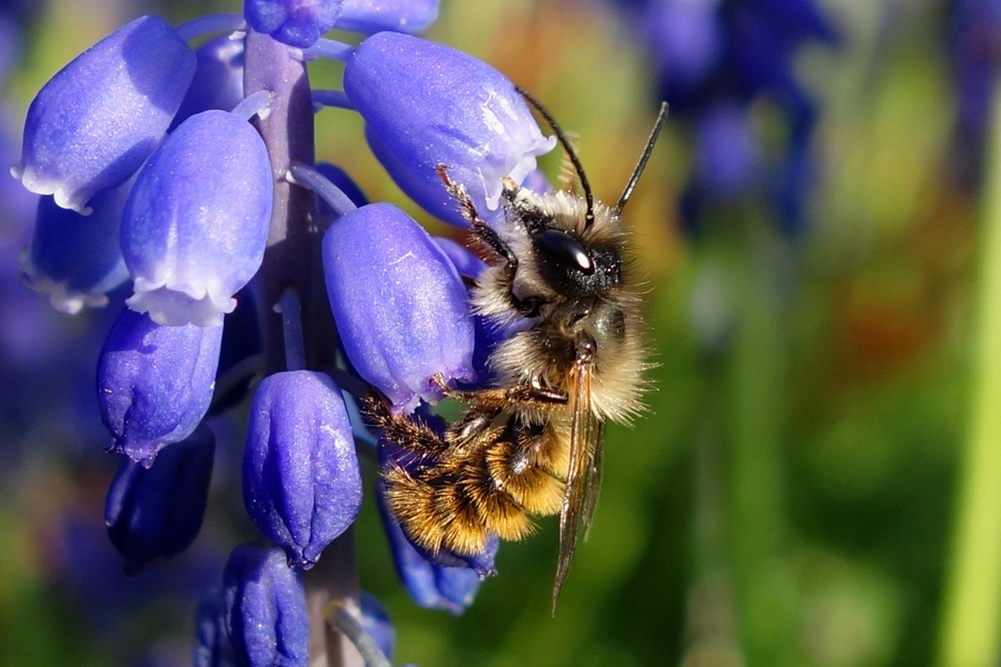 Meet The Bees And Other Pollinators Mosaic
