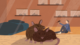 Colour illustration of rats in a bedroom