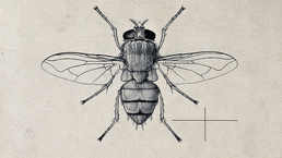 LR_BlowFly_Credit_Wellcome-Library,-London