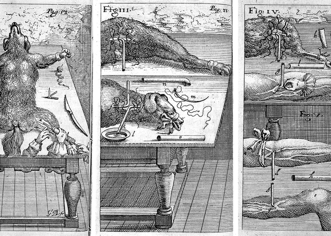 Three plates showing different processes of transfusing blood between man and dog